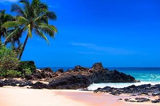 Tropical Decor Hawaiian, Palm Tree Seascape Wall Art