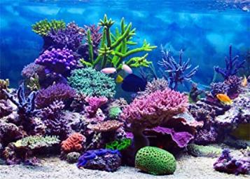 Aquarium Coral Fish Blue Sea Romantic Wallpaper